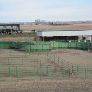 Research Feed Yard