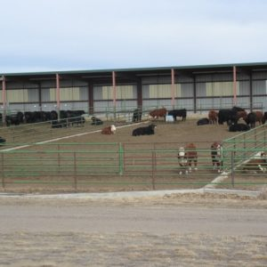 large feed lot pens