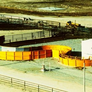Feed yard cattle handling system