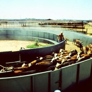 large wide curved lane on feed yard