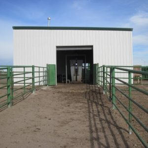 Modern cattle handling facility in China