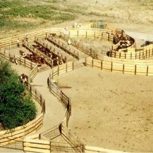Large cattle ranch handling/sorting/ and weighing facility