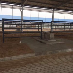 Feed yard water trough with manure step, and bully panels
