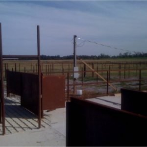 It is important to groove the concrete at the area where cattle exit the squeeze chute to prevent slipping and falling