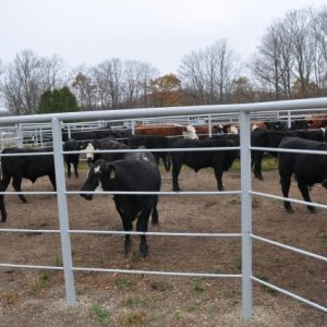 A 5-rail fence prevents calves from climbing through the fence