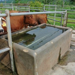 Concrete water tanks keep water cool in hot climates