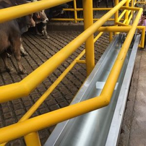 animals shall have access to clean water in all holding pens and, if held longer than 24 hours, access to feed