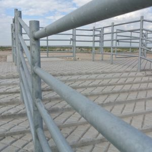 A 12 foot wide unloading area is recommended to provide cattle with an easy unobstructed exit off trucks
