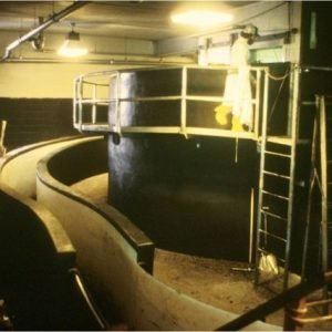 A restricted space cattle handling system