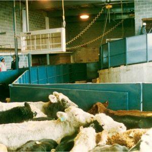 A medium sized slaughter plant handling system