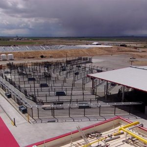 High-speed slaughter plant holding pens