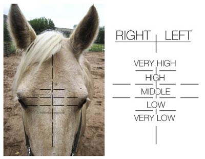 horse whorl scale